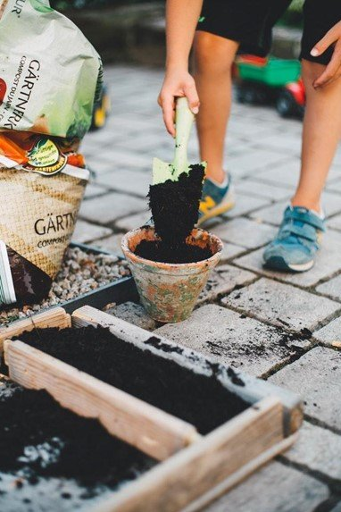 How to Get Your Victory Garden Growing